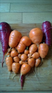 Stubbly carrots